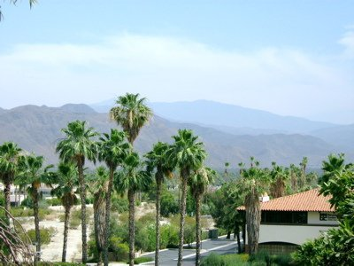 Palm Springs Real Estate Surrounded by Palms